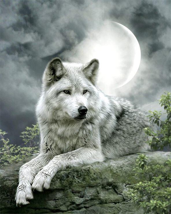 Красивая открытка волка, черном фоне