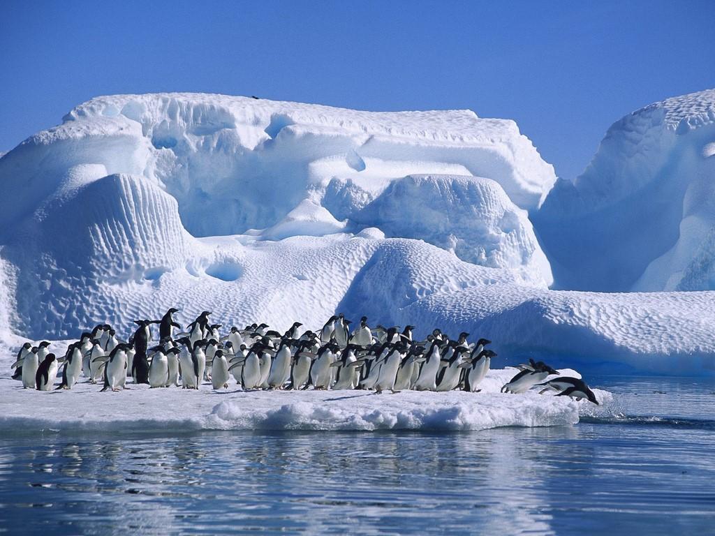Картинки про антарктиду