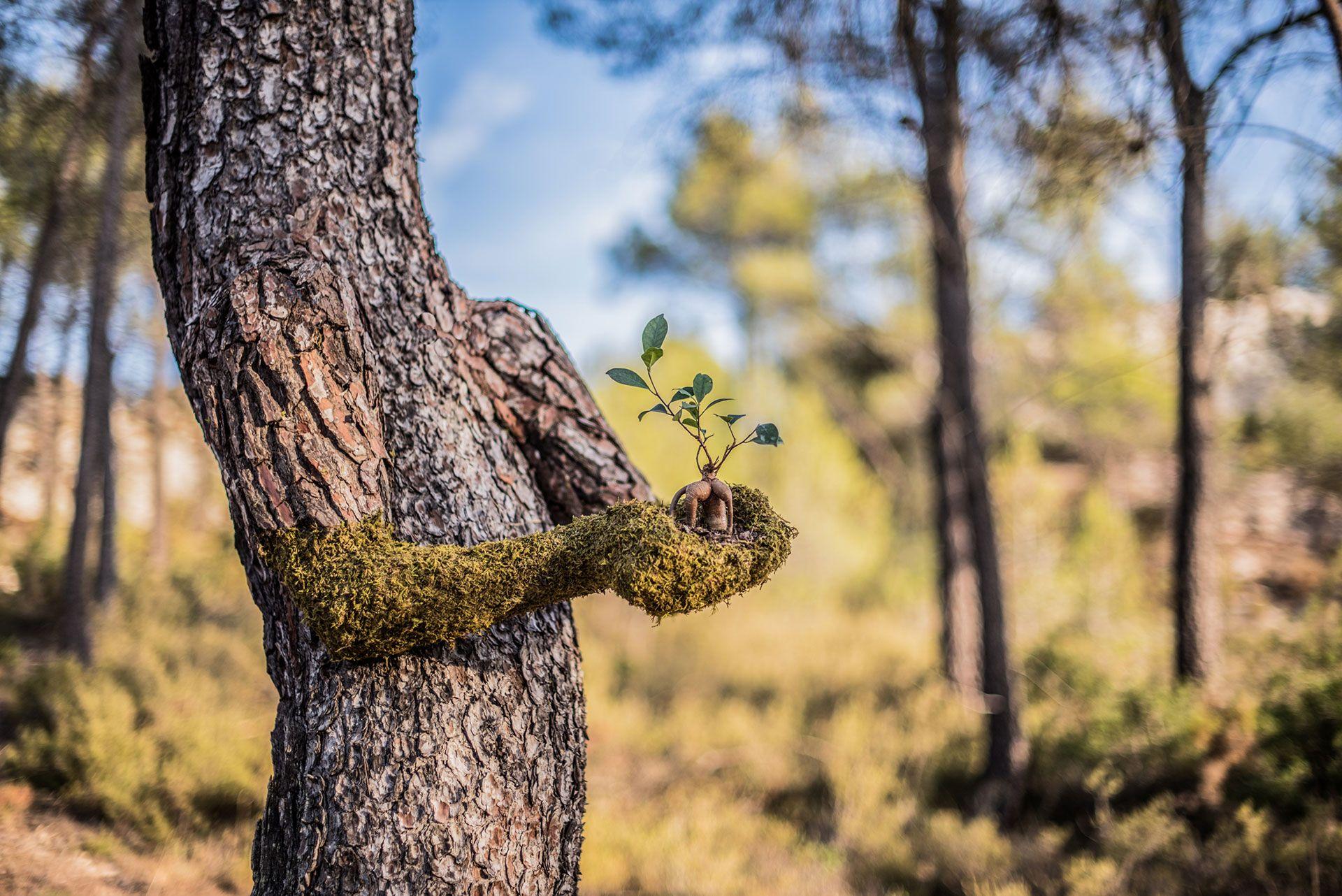 Дерево и человек картинки